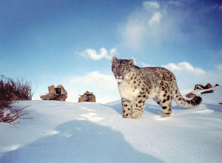 hemis-national-park - LLI Blog