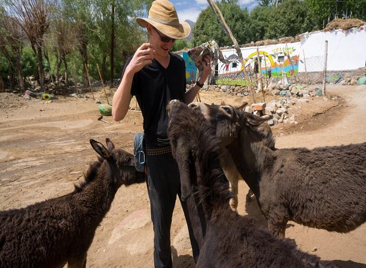 Donkey Sanctuary Ladakh